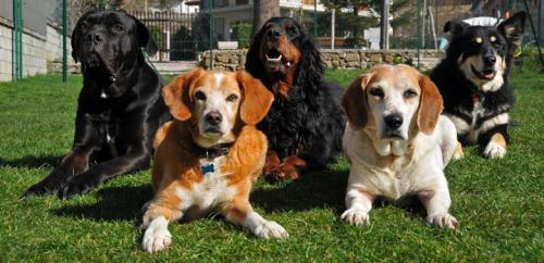 JPG foto anagrafe canina